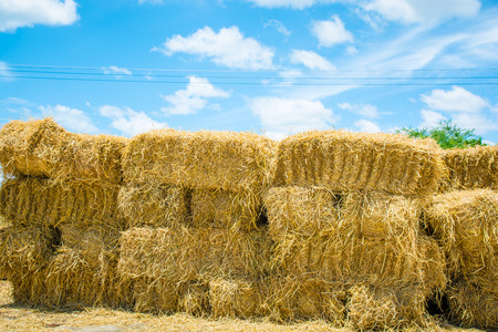 bales: Square Bales In Field