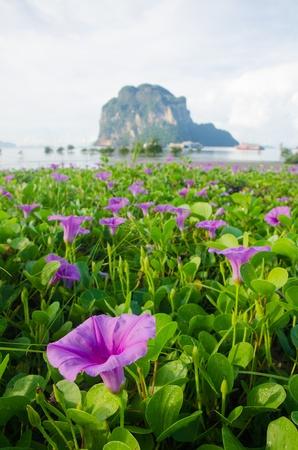Flower field near pakmeng harbour in trang province