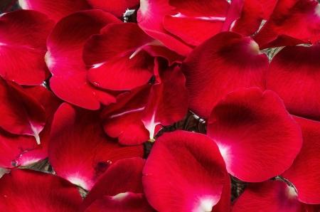 Petal of rose flower in water Stock Photo