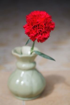 Vivid red carnation with drop Stock Photo