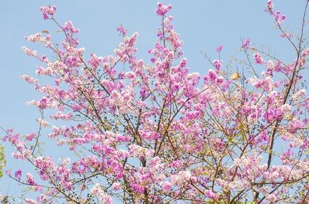 Pink tree Stock Photo