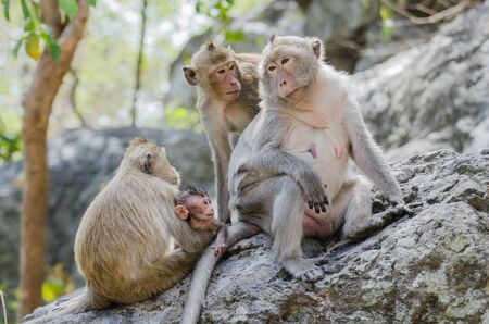 Family of monkey