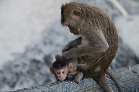 Naughty monkey Stock Photo
