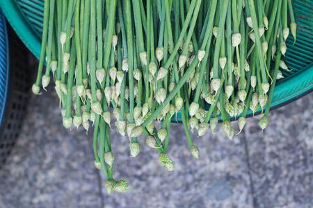 alliaceae: Allium tuberosum,Roxb,Alliaceae in basket