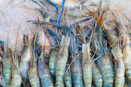 freshwater: giant freshwater prawn ,River shrimp
