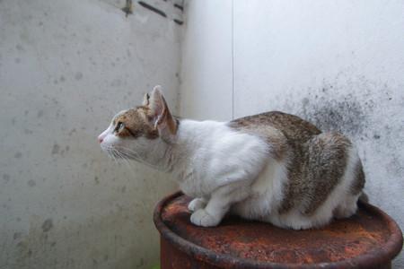 hybrid cat