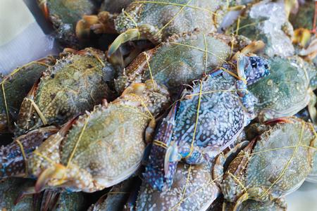 blue swimmer crab: horse crab - Flower crab - Blue crab - Blue swimmer crab - Sand crab on ice at market
