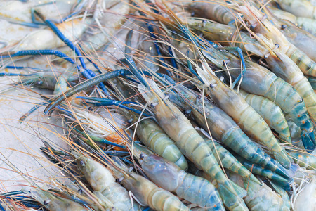 giant freshwater prawn ,River shrimp