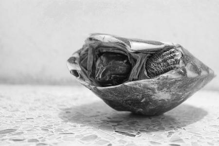 overturn: turtles overturn on concrete