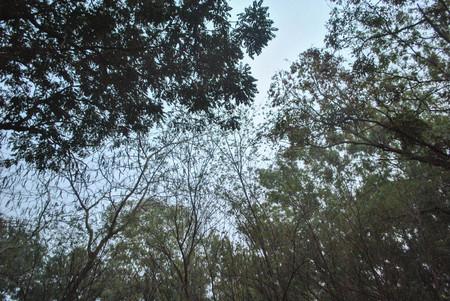 Sillhouette tree background Stock Photo