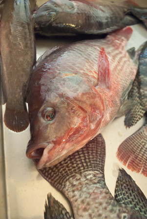 Nile tilapia fish in market