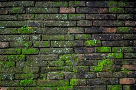 Old wall and green mos background