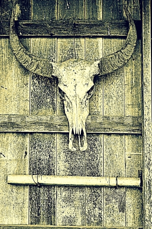 volition: Buffalo bone 3