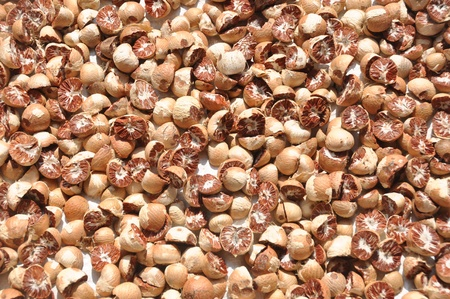 Betel nut drying photo