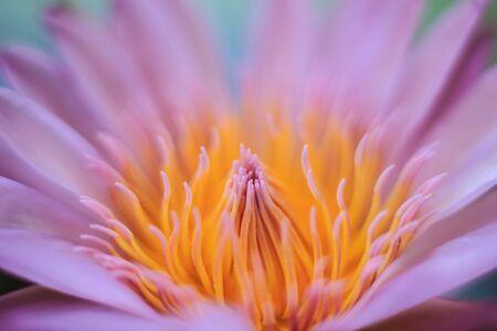 lotus pollen macro perspective  Taken with the tube lens photo