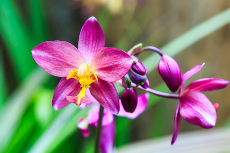 violated: Orchids in a variety of beautiful and violated that varies.