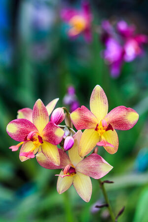 violated: Orchids come in a variety of beautiful and violated that varies. Stock Photo