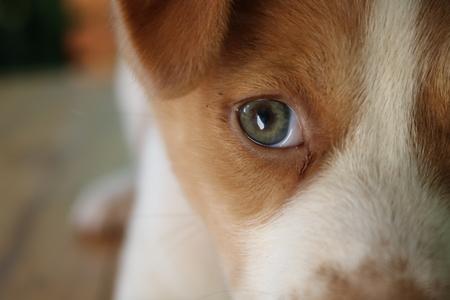 eye of Puppy