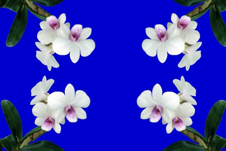 White orchid water color background