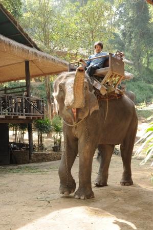 east riding: Elephant show in Maesa elephant camp, Chiangmai