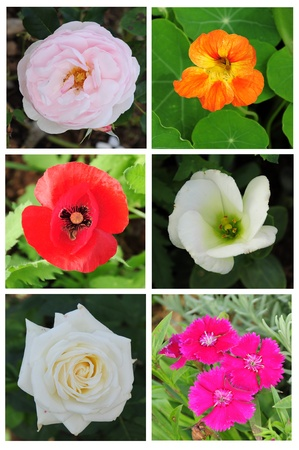 collection mixed flowers in north Thailand set 3 Stock Photo - 11987084