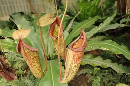 plants species: Le piante carnivore nella pianta house2