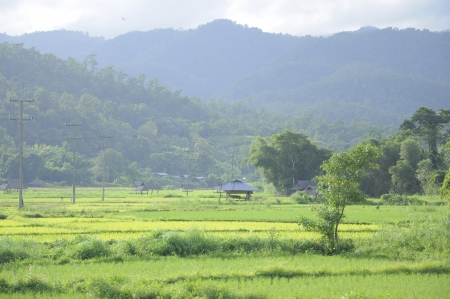 Green paddy field covered by mountain photo