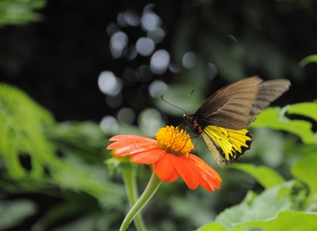 Gerbera flower and butterfly 2  photo