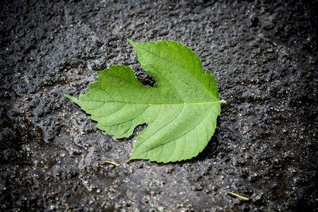 Single leaf on the road Dark edge