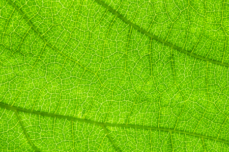 green leaf, macro, zoom blur