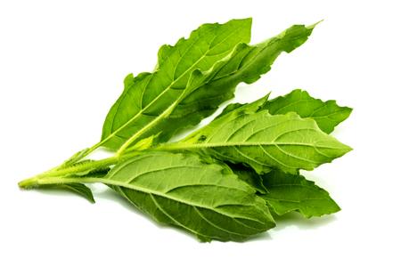 Basil leaves, white background