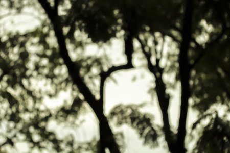 Night forest blurred photo 免版税图像