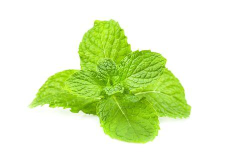 Basil leaves on a white background. 免版税图像