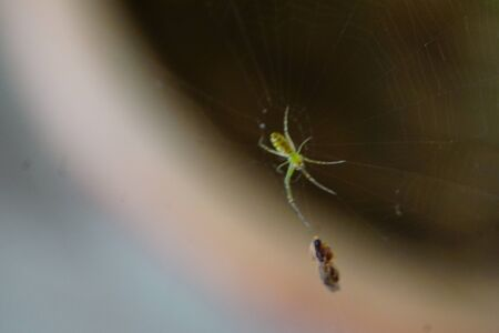 a spider in their web , have eight legs and able to inject venom