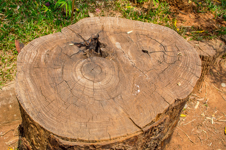 conscious: Old stump and crack texture. Old stump. Tree stump. Dry stump. Deforestation. Destroy trunk. Causes global warming. Removal tree. Conscious mind concept. Brown trunk. Wooden surface. Stock Photo