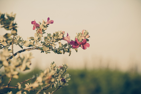 washed out: Vintage image of red lilac flowers on the tree on a sunny spring day. Photo filtered in faded, washed out, retro style. Nostalgic vintage concept. Stock Photo