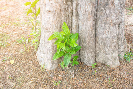 reforestation: Small trees on trees