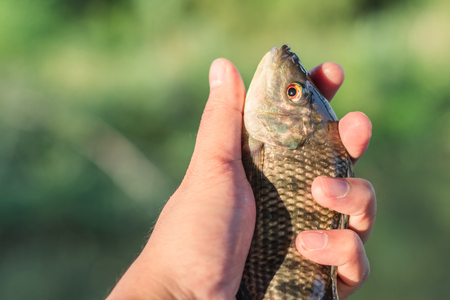 raptorial: Catch  fish for Sell fishmonger. Handle fish. Stock Photo