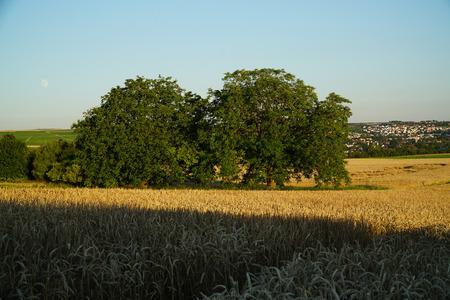Summer crop fields