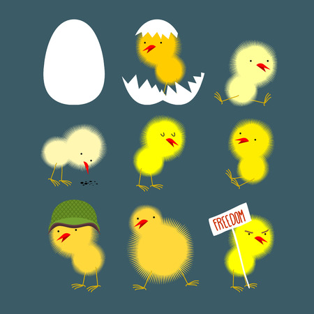 chicks: Set of yellow chicks: white egg and chicken. Chick protests and chicken in a helmet. Vector illustration Illustration