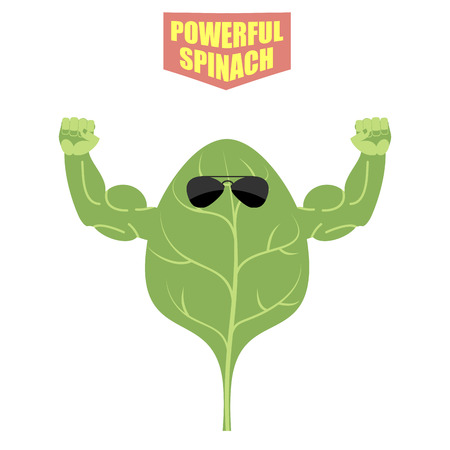 spinach: powerful spinach. A strong plant with big muscles. Green, fresh lettuce. Vector illustration Illustration