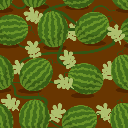 melon field: Water-melon plantation seamless pattern. Fruity vector background. Texture plants on bed. Plot sowed watermelons Illustration