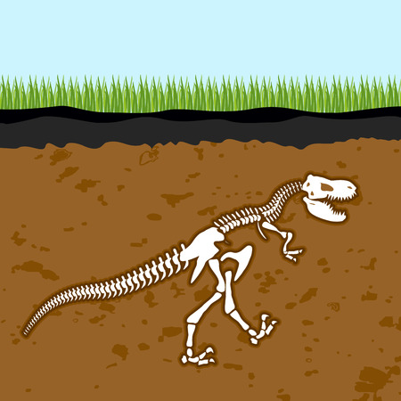 archaeological: Skeleton of  Tyrannosaurus Rex. Dinosaur bones in Earth. Fossil Ancient fearsome animal. Slice through  soil. archaeological excavations. Prehistoric monster