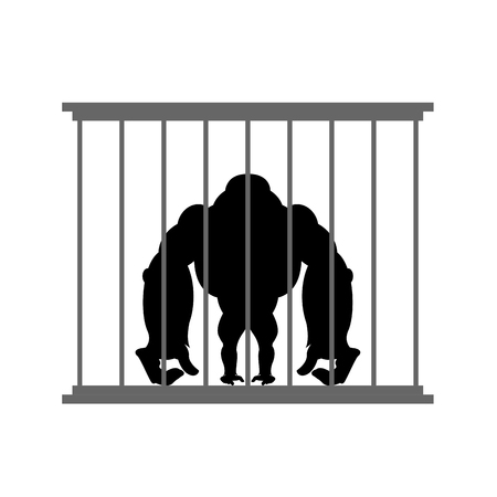 captivity: Gorilla in cage. Animal in  Zoo behind bars. Big and strong monkey in captivity. Dangerous wild animal in captivity.