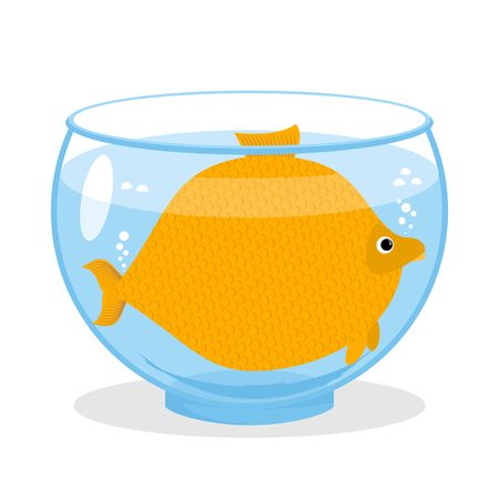 Fat fish in aquarium. Fat marine animal. Big goldfish.