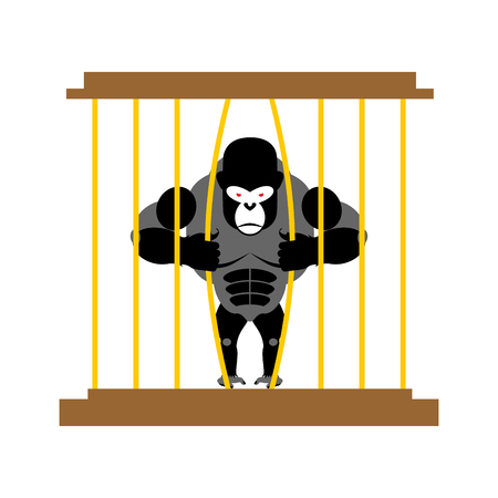 captivity: Gorilla in cage in Zoo. Strong Scary wild animal in captivity. Big Monkey sits behind bars. Animal wants to get out of  cage.