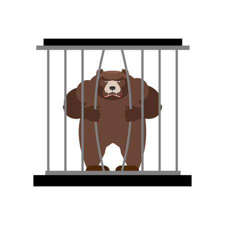 captivity: Bear in Zoo cage. Strong Scary wild animal in captivity. Large grizzly bear sitting behind bars. Animal wants to get out of  cage.