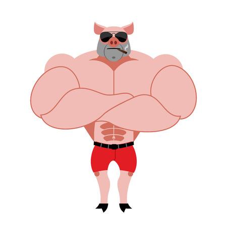 巨大な筋肉を持つ強い豚ボディービルダー。ファーム動物選手。葉巻と強力な動物は。