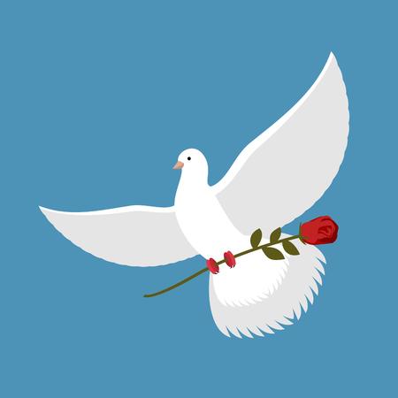 Weiße Taube und rote Rose. Schöner Vogel trägt rote Blume. fliegende Taube