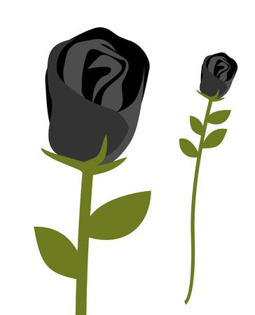 rare: Black rose. Dark scary flower. Rose petals with black symbol of sadness. Bud Black rare roses. Unusual plant Illustration
